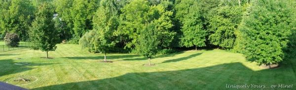 Louisville KY backyard