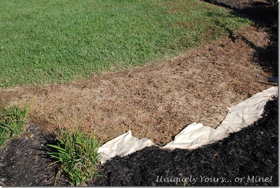 Paper under mulch for weed control