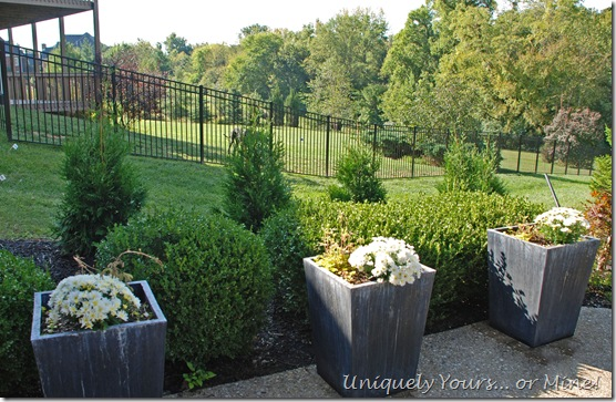 Adding privacy screening to your landscape plan